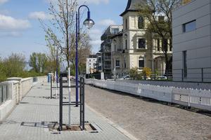Frisches Grün für die Zollstraße in Magdeburg: Im Rahmen des Neubaus der Hochwasserschutzmauer ließ die Landeshauptstadt 70 junge Kaiserlinden setzen.