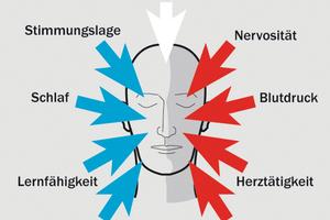 Lärm ist nicht nur eine nervende Belästigung – er macht auch nachweislich krank.