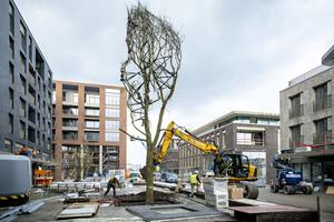 Der Stadtbaum erhält durch den Einsatz des TreeTanks eine schützende Wachstumszone.