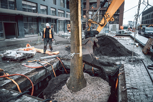 Versiegelte Flächen verringern die Wasser- und Nährstoffzufuhr des Stadtbaums. Der TreeTank trägt dazu bei, dass die Wurzeln von der Oberfläche in die Tiefe gelenkt werden.