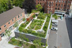 Begrünte Dächer werten nicht nur Quartiere auf, sie leisten außerdem wertvolle Dienste für das Kleinklima.