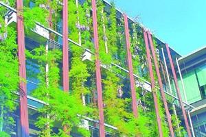 Neubau auf dem Gelände der Berliner Humboldt-Universität: Die Fassadenbegrünung sieht nicht nur gut aus, sondern schützt durch Verschattung und erzeugt Verdunstungskälte