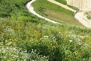 Die neu angelegten Flächen fügen sich harmonisch in das Landschaftsbild ein
